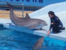 India Takes A Stand Against Captive Dolphins
