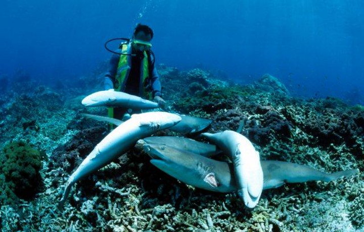 Florida Passes Law  Prohibiting the import, export, & sale of shark fins