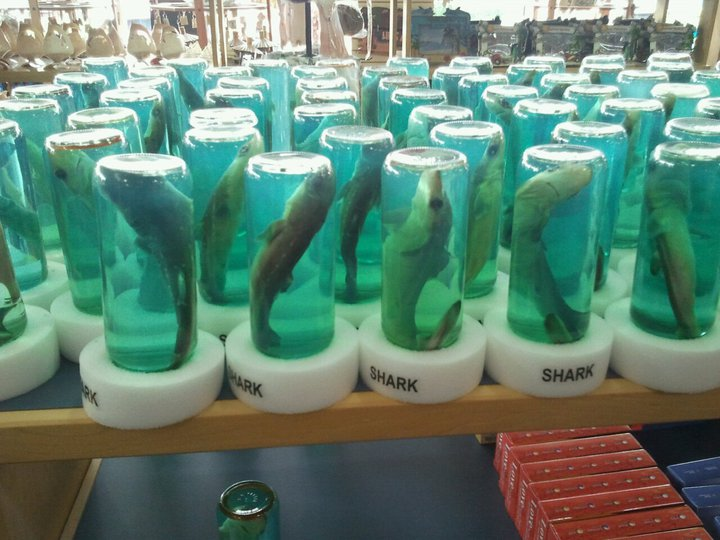 Stop the sale of Shark in a bottle