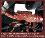 California Spiny Lobster Season
