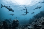 Are Sharks Truly Protected in Costa Rica?